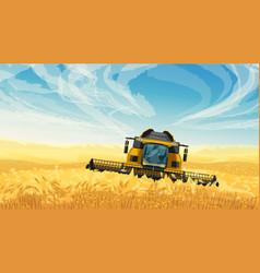 Harvester on golden wheat field blue sky vector