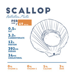 Nutrition facts of scallop hand draw sketch vector