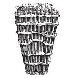 Organ pipe coral vintage vector