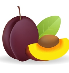 Prunes vector image