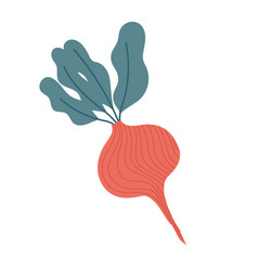 beetroot fresh vegetable food icon isolated design vector image