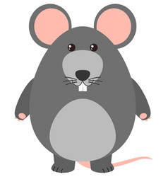 Gray rat on white background vector