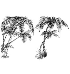 Palm trees isolated vector