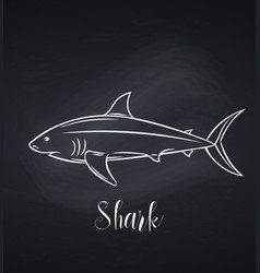 shark chalk icon blackboard vector image