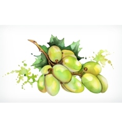Watercolor painting grapes vector image vector image