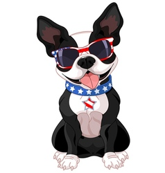 4th of July Boston Terrier vector