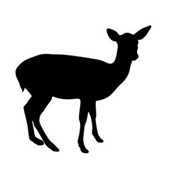 black silhouette of fawn on white background of vector image