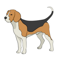 Cartoon of beagle dog vector