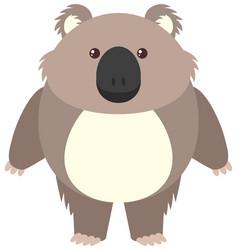 cute koala on white background vector image
