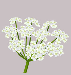 daucus carota common names wild carrot vector image