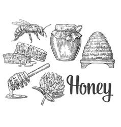 Honey set jars of honey bee hive clover vector