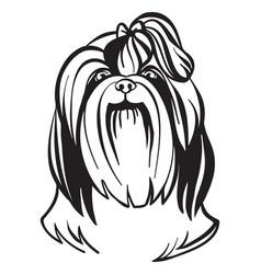 image shih tzu dog on white background vector image