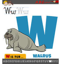 Letter w from alphabet with cartoon walrus animal vector