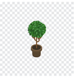 isolated blossom isometric tree element vector image vector image