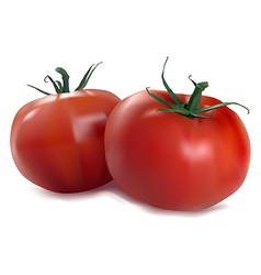 two red tomatoes vector image vector image
