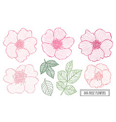 hand drawn floral decoration vector image