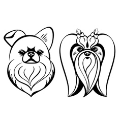 Maltese dogs vector