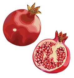 Pomegranates vector