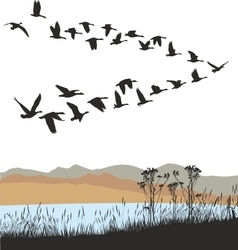 Migrating wild geese over autumn landscape vector image