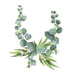 watercolor bouquet with green eucalyptus vector image vector image