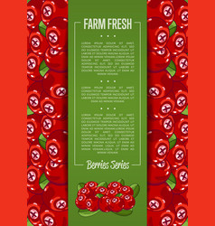 farm fresh berry banner with juicy cranberry vector image
