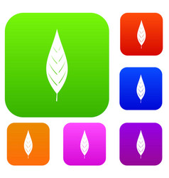 Leaf of willow set color collection vector