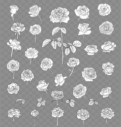 rose drawing set isolated on transparent vector image