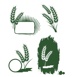 green ears of wheat vector image