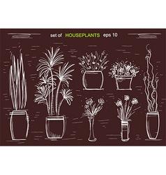Houseplants on chalk board isolated vector image