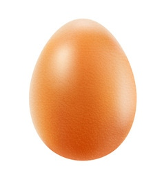 realistic brown egg vector image vector image