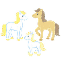 family of horses vector image
