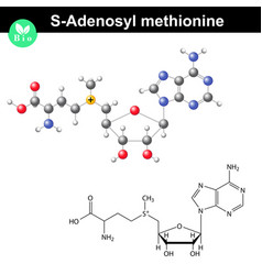 s adenosyl methionine coenzyme molecular structure vector image