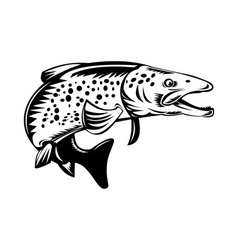 Spotted speckled trout fish jumping vector