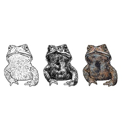 Toad isolate on white background vector