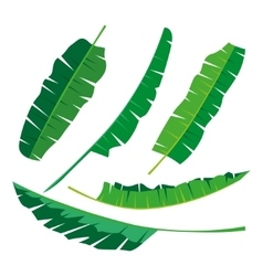 Tropical banana Leaves Collection isolate vector