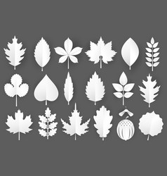 white paper cut autumn leaves set 3d fall vector image