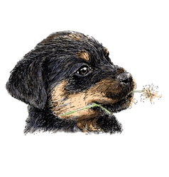 Rottweiler vector image vector image