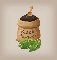 black pepper in the bag vector image