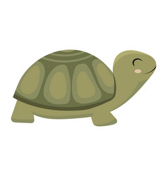 cartoon turtle a green vector image