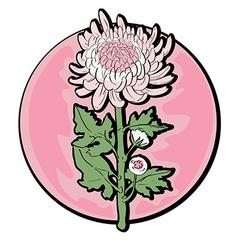 chrysanthemum clip art vector image