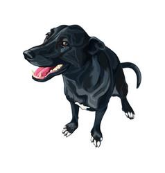 Dog created crossing labrador retriever and vector