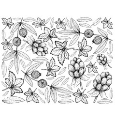 Hand drawn background of cloudberry and cabeludinh vector