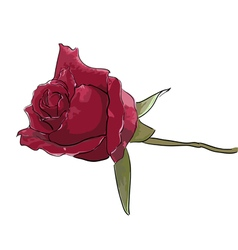 Rose - hand painting vector image
