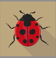 ladybug isolated flat style vector image vector image