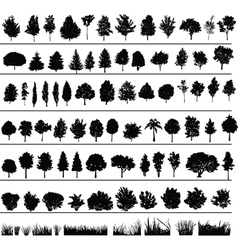 trees bushes grass vector image vector image