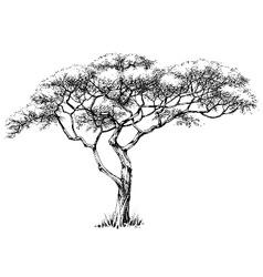 African tree marula tree vector