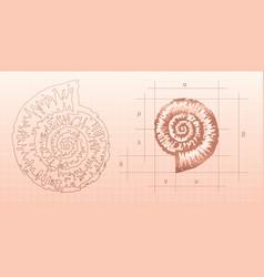 Nautilus graphic vector