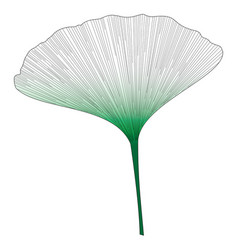 botanical series elegant single ginkgo leaf 2 vector image
