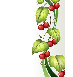 A vine plant with fruits vector image