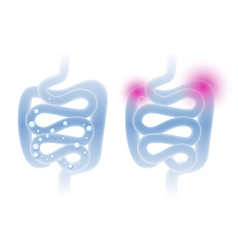 abstract intestine in a light blue vector image